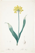 Antiques:Posters & Prints, Pierre-Joseph Redouté (1759-1840). Two Prints: Allium Moly. [and:]Gladiolus Cuspidatus longiflorus.. Two beautiful st... (Total: 2Items)