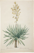 Antiques:Posters & Prints, Pierre-Joseph Redouté (1759-1840). Two Prints: Yucca Gloriosa.[and:] Yucca Gloriosa (Detail).. Two fantastic stipple ... (Total:2 Items)