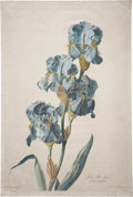 Antiques:Posters & Prints, Gerard van Spaendonck (1746-1822). Iris Bleu-Clair.. Stippleengraving with hand-coloring, from the Dutch artist'sFleur...