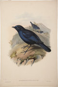 Antiques:Posters & Prints, John Gould (1804-1881). Two Prints: Myiophoneus Insularis. [and:] Podoces Hendersoni.. Two hand-colored lithographs fr... (Total: 2 Items)
