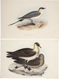 Antiques:Posters & Prints, John Gould. Two Prints: Parasitic Gull. [and:] Pomerine Gull. Twohand-colored lithographs from Gould's Birds of Europ... (Total:2 Items)