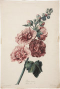 Antiques:Posters & Prints, Gerard van Spaendonck (1746-1822). Two Prints: Rose Tremiere.[and:] Jacinthe double.. Two stipple engravings with han... (Total:2 Items)