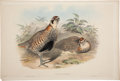 Antiques:Posters & Prints, John Gould (1804-1881). Two Prints: Perdix Hodgsonlæ. [and:]Galloperdix Spadiceus.. Two hand-colored lithographs of f...(Total: 2 Items)