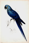 Antiques:Posters & Prints, Edward Lear (1812-1888). Macrocercus Hyacinthinus - HyacinthineMaccaw.. A beautiful and brilliant hand-colored lithograph...