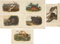 Antiques:Posters & Prints, John James Audubon. Six Small Mammal Prints (Octavo Edition). Sixhand-colored lithographs from The Quadrupeds of North Am...(Total: 6 Items)
