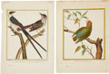 Antiques:Posters & Prints, François Nicolas Martinet. Two Bird Prints. Two hand-coloredengravings from Histoire naturelle des oiseaux. Both ve...(Total: 2 Items)