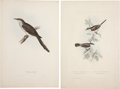 Antiques:Posters & Prints, John Gould. Four Prints: American Cuckoo. [and:] Common and LesserWhitethroat. [and:] Delchon Nipalensis. [and:] ... (Total: 4 Items)