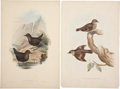 Antiques:Posters & Prints, John Gould. Four Prints: Cinclus Sordidus. [and:] ClimacterisScandens. [and:] Waxen Chatterer. [and:] Calliope Pe... (Total: 4Items)