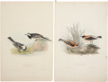 Antiques:Posters & Prints, John Gould. Four Prints: Pied Wag-Tail. [and:] Russet Wheatear.[and:] Accentor Altaicus. [and:] Snow Finch. Fou... (Total: 4Items)