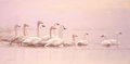 Western:20th Century, GUY JOSEPH COHELEACH (American, b. 1933). Trumpeter Swans. Oil on canvas. 24 x 48 inches (61.0 x 121.9 cm). Signed lower...