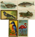 Non-Sport Cards:Lots, 1910-1912 T42 Bird Series, T43 Bird Series and T58 Fish SeriesCollection (41)....