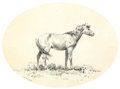Fine Art - Painting, American:Modern  (1900 1949)  , OLAF C. SELTZER (American, 1877-1957). Indian Pony, circa1900. Ink on paper. 11 x 14 inches (27.9 x 35.6 cm). Signed lo...