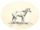 OLAF C. SELTZER (American, 1877-1957) Indian Pony, circa 1900 Ink on paper 11 x 14 inches (27.9 x 35.6 cm) Signed lo