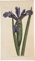 Books:Non-fiction, William Curtis. The Botanical Magazine; or, Flower-GardenDisplayed. London: Stephen Couchman, 1793-1806.. Twenty-...(Total: 12 Items)