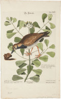 Antiques:Posters & Prints, Mark Catesby. Two Bird Prints: Die Seelerche - Tab. XLIV. [and:] Die purpurfarbe Dohle - Tab. XXIV. Two hand-colored eng... (Total: 2 Items)