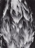 Photography :20th Century , PAUL CAPONIGRO (American, b. 1932). Feathers, 1964. Gelatin silver, circa 1975. 8-1/2 x 6 inches (21.6 x 15.2 cm). Recto...