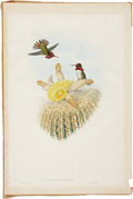Antiques:Posters & Prints, John Gould. Selasphorus Floresii. A charming hand-colored lithograph with iridescent highlights from Gould's Monograph of ...