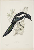 Antiques:Posters & Prints, John Gould. Two Prints: Magpie. [and:] Fuligula Marila. Twohand-colored lithographs from Gould's Birds of Great Brita...(Total: 2 Items)