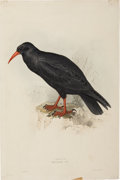 Antiques:Posters & Prints, Edward Lear. Chough. A hand-colored lithograph by Lear from JohnGould's Birds of Europe (London: 1832-37). Some areas o...