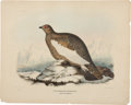 Antiques:Posters & Prints, Daniel Giraud Elliot. Spitzbergen Ptarmigan. Hand-colored lithograph from Elliot's A Monograph of the Tetraoninae, or Fami...