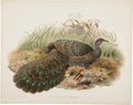 Antiques:Posters & Prints, Daniel Giraud Elliot (1835-1915). Polyplectron Germaini.. Adelightful hand-colored peacock lithograph from Elliot'sMon...