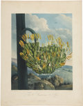 Antiques:Posters & Prints, Robert Thornton (1768-1837). The American Aloe.. A strikingmezzotint engraving with hand-coloring, from Thornton's The...