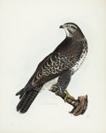 Antiques:Posters & Prints, Prideaux John Selby. Common Buzzard, Female - Plate VI.Hand-colored engraving from the second edition of Selby'sIllustra...