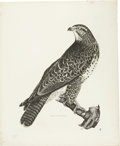 Antiques:Posters & Prints, Prideaux John Selby. Common Buzzard, Female - Plate VI - Uncolored.Engraving from the first edition of Selby's Illustrati...