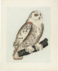 Antiques:Posters & Prints, Prideaux John Selby. Snowy Owl - Plate XXIII. Hand-coloredengraving from Selby's Illustrations of British Ornithology....