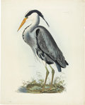 Antiques:Posters & Prints, Prideaux John Selby (1788-1867). Common Heron - Plate II.. Awonderful hand-colored engraving from Selby'sIllustrations...