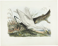 Prideaux John Selby (1788-1867). Little Egret Heron - Plate V.  A lovely hand-colored engraving from the second