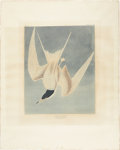 Antiques:Posters & Prints, John James Audubon (1785-1851). Great Tern - Plate CCCIX (Havell Edition).. A hand-colored aquatint engraving by R. Havell...