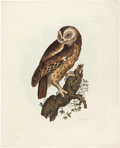 Antiques:Posters & Prints, Prideaux John Selby. Tawny Owl - Plate XXV. Hand-colored engravingfrom Selby's Illustrations of British Ornithology. Ve...