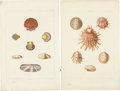 Antiques:Posters & Prints, George Perry. Four Shell Prints: Four hand-colored aquatints, fromConchology (London: 1811). All in very good condition...(Total: 4 Items)