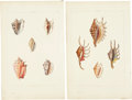 Antiques:Posters & Prints, George Perry. Four Shell Prints: Four hand-colored aquatints, from Conchology (London: 1911). All in very good condition... (Total: 4 Items)