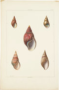 Antiques:Posters & Prints, George Perry. Three Shell Prints: Three hand-colored aquatints,from Conchology (London: 1811). All in very good conditi...(Total: 3 Items)