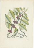 Antiques:Posters & Prints, Mark Catesby (1682-1749). Two Prints: Anguis graciliscæruleo-viridis - Plate 47. [and:] Anguis gracila fuscus - Plate50.... (Total: 2 Items)
