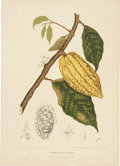 Antiques:Posters & Prints, Berthe Hoola van Nooten (1840-1885). Three Prints: Theobroma Cacao.[and:] Carica Papaya. [and:] Citrus Sarcodactylis.... (Total: 3Items)