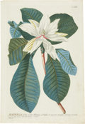 Antiques:Posters & Prints, Georg Dionysius Ehret (1708-1770). Magnolia - Plate LXII.. A lovely hand-colored engraving from Trew's Plantae Selectae...