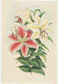 Antiques:Posters & Prints, Walter Hood Fitch. Two Lily Prints. Two hand-colored stippleengravings from Elwes' A Monograph of the Genus Lillium(Lo... (Total: 2 Items)
