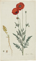 Antiques:Posters & Prints, William Curtis. Three Botanical Prints from Flora Londinensis. Three hand-colored copper engravings, including w... (Total: 3 Items)