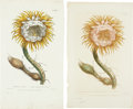 Antiques:Posters & Prints, Phillip Miller. Four Botanical Prints. Four hand-coloredcopperplate engravings from Miller's Figures of the MostBeautifu... (Total: 4 Items)