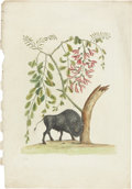 Antiques:Posters & Prints, Mark Catesby. Two Prints: American Bison - Plate 20. [and:] FlyingSquirrel with Persimmon - Plate 76. Two hand-colored ... (Total: 2Items)