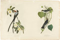 Antiques:Posters & Prints, John James Audubon (1785-1851). Forked-Tail Flycatcher - Plate 53, No. 8-7 [with] Tyrant Fly-catcher - Plate 56, No. 8-8 (...