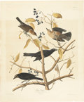 Antiques:Posters & Prints, John James Audubon (1785-1851). Rusty Grackle - Plate CLVII (HavellEdition).. A lovely hand-colored aquatint engraving by...