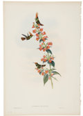 Antiques:Posters & Prints, John Gould (1804-1881). Two Prints: Lophornis Delattrei. [and:] Calothorax Decoratus.. A pair of delightful hand-color... (Total: 2 Items)