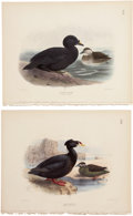 Antiques:Posters & Prints, Henry E. Dresser. Four Water Bird Prints. Four hand-colored stippleengravings from Birds of Europe (London: 1875). All ...(Total: 4 Items)