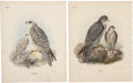 Antiques:Posters & Prints, Henry E. Dresser. Four Falcon Prints: Four hand-colored stipple engravings from Birds of Europe (London: 1875). All very... (Total: 4 Items)