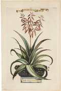 Antiques:Posters & Prints, Abraham Munting (1626-1683). Five Botanical Prints.. Five lovelyhand colored copper engravings on laid paper from Munting...(Total: 5 Items)