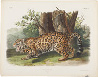 John James Audubon (1785-1851). Felis Onca - Plate CI (Bowen Edition).  A superb lithograph of the female Jagua